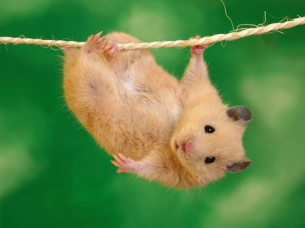 Mơ thấy chuột con