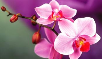 mơ thấy hoa biết nói